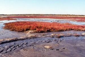 Природные лечебные ресурсы    Основными рекреационными ресурсами являются: приморско-степной климат, морская вода, песчаные пляжи, лечебная рапа и грязи Сакского озера, минеральные воды